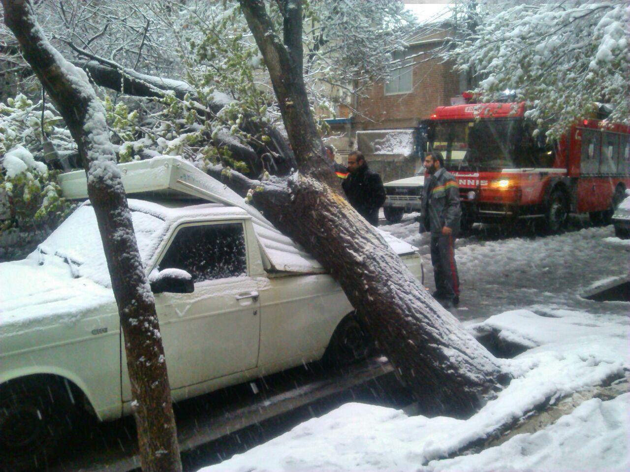شکستن درختان بر اثر برف بهار در تبریز / تصاویر