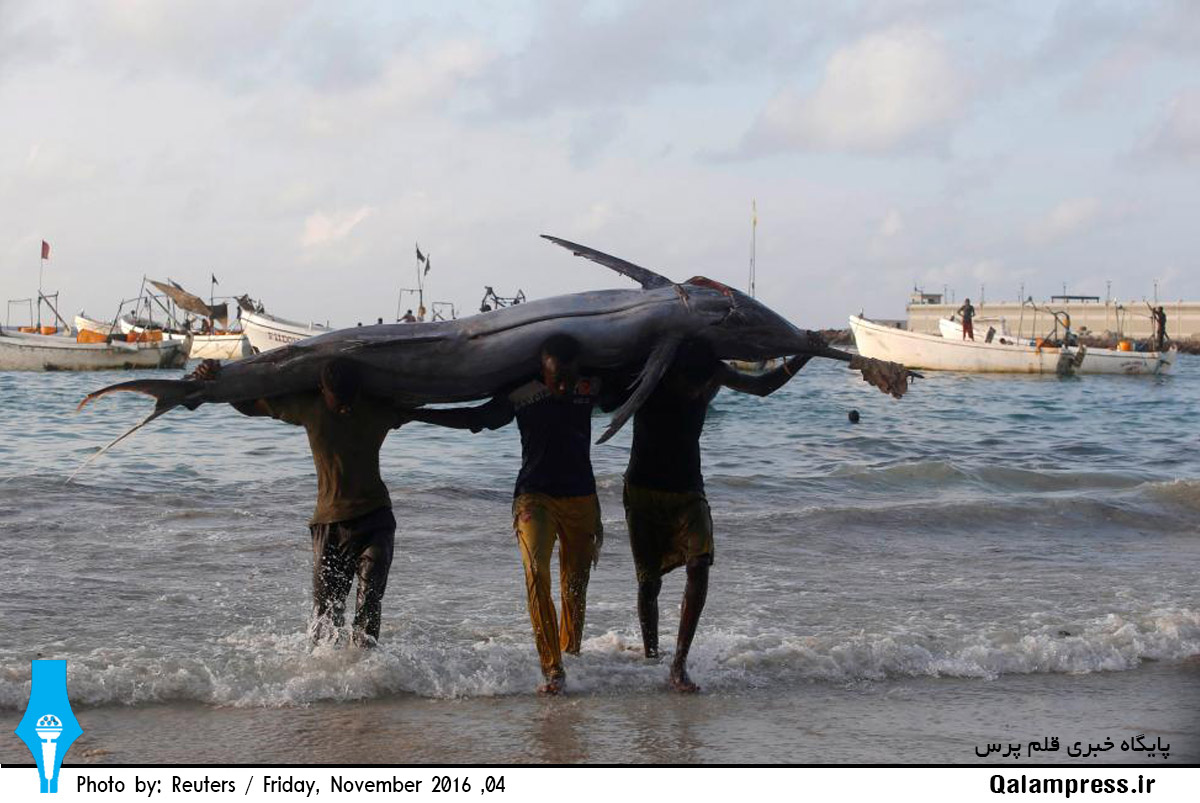 صید ماهی غول پیکر + عکس