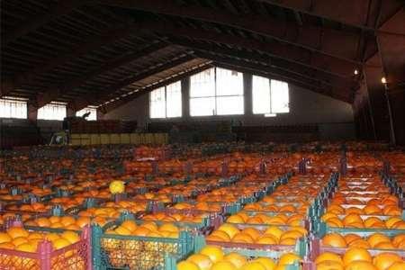 ماجرای پرتقال های انبار شده شب عید از زبان مسوولان + فایل صوتی