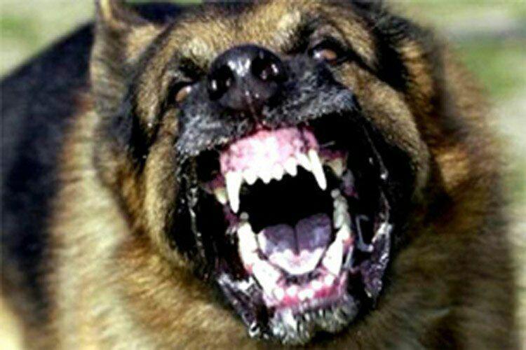 حمله سگ وحشی به پیرمرد نگون بخت در قراملک