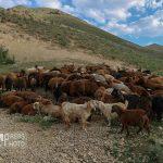 طبیعت گردی در هریس/ گزارش تصویری