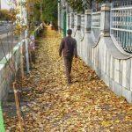 خزان پروژههای شبانهروزی و برگریز خدمات سانتاماریایی