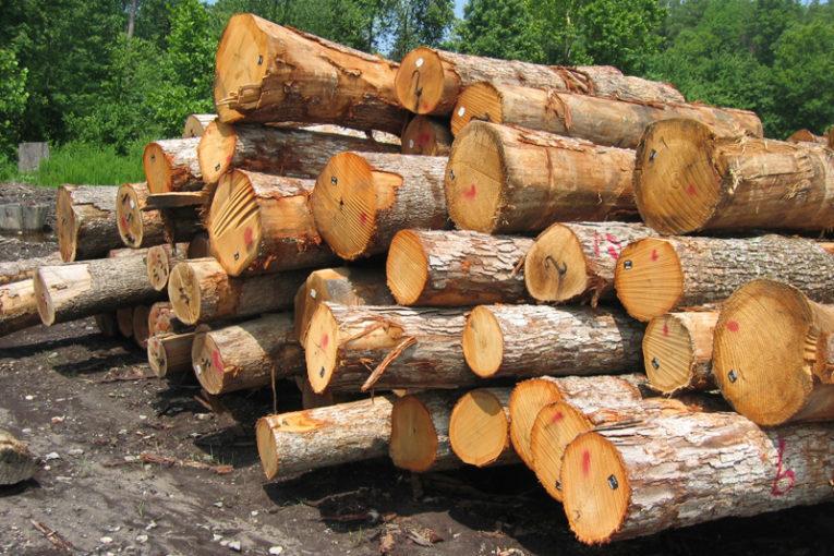 كشف ۱۸ تن چوب قاچاق در شهرستان اهر