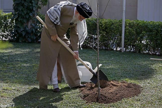 حفظ پوشش گیاهی باید جایگاه واقعی خود را در فرهنگ عمومی پیدا کند