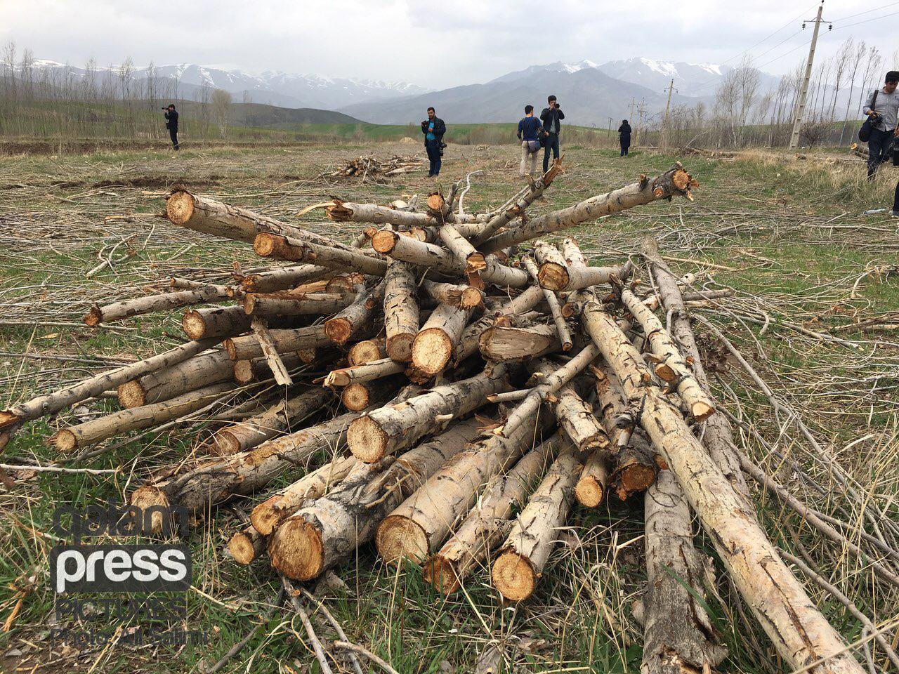 نگرانی ها از قطع و حمل درختان ارسباران/ مسوولان توضیح می دهند