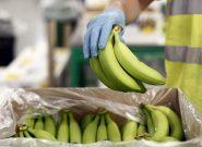 جریمه ۱٫۴ میلیاردی یک شرکت وارد کننده موز