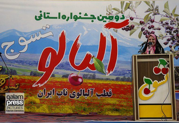 دومین جشنواره استانی برداشت آلبالو در شهر تسوج شبستر
