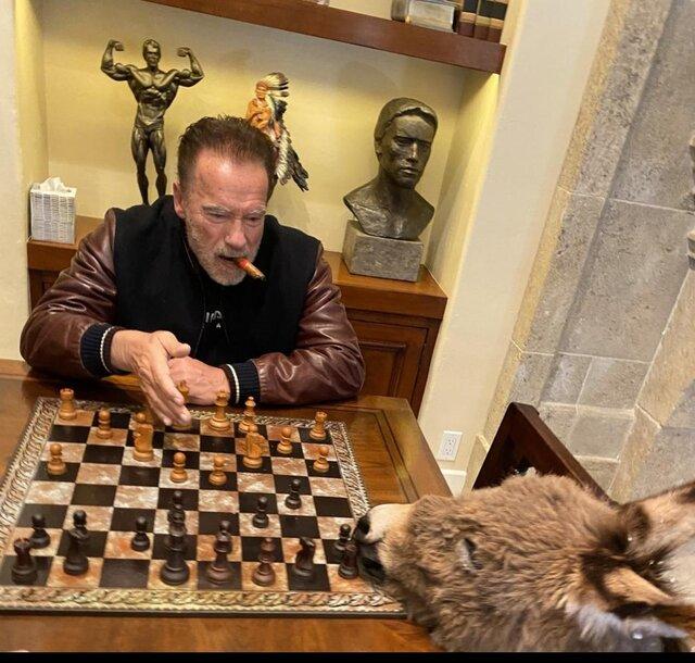واکنش گری کاسپاروف به بازی شطرنج آرنولد با الاغش