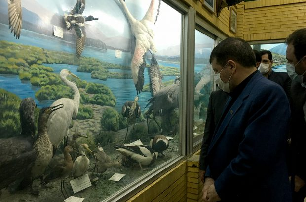 بازدید رئیس کل دادگستری آذربایجان شرقی از موزه تاریخ طبیعی