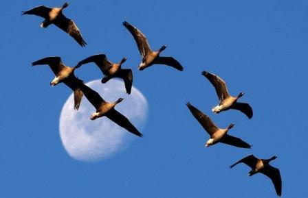 شکار پرندگان مهاجر وحشی تا اطلاع ثانوی ممنوع