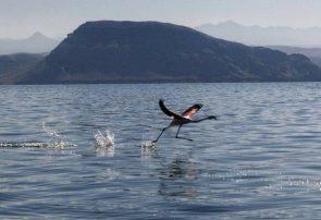 افزایش ۹۳ سانتیمتری تراز آب دریاچه ارومیه
