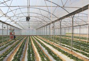 تولید سالانه ۲۳ هزار تن صیفیجات گلخانهای در منطقه آزاد ارس