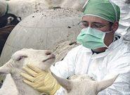 کووید ۱۹ بیماری مشترک بین انسان و حیوان نیست