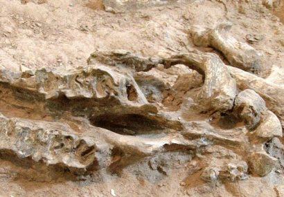 تکمیل مرکز تحقیقات فسیلشناسی کشور نیازمند اعتبارات ملی و استانی